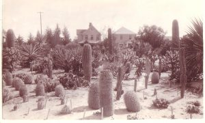 Edward N. James Smiley Park Cactus